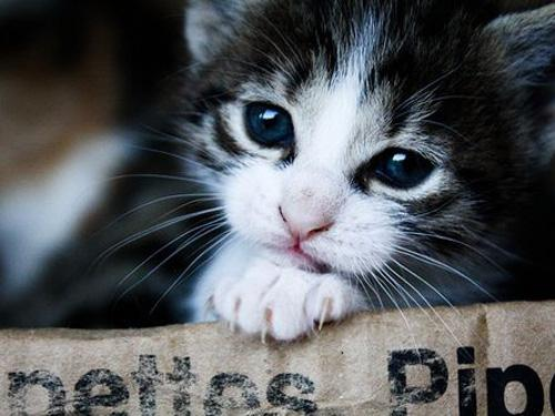 a kitty cats 7 Daily Awww: Cats are taking over the internets and Im cool with that (38 photos)