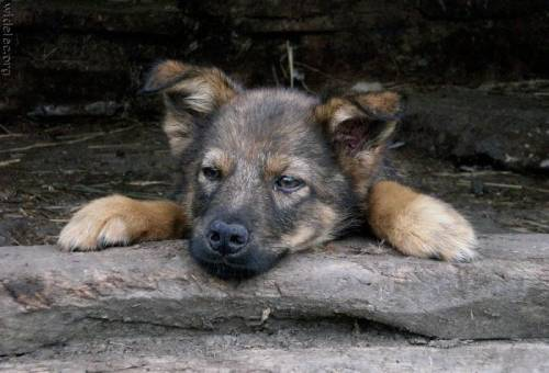 awesome dogs 9 Daily Awww: For the love of dogs... (25 photos)