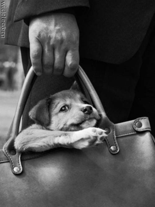 awesome dogs 3 Daily Awww: For the love of dogs... (25 photos)