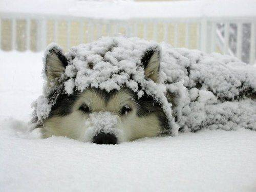 awesome dogs 27 Daily Awww: For the love of dogs... (25 photos)