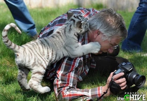 funny awesome animals 2 Animals that dont suck (45 Photos)