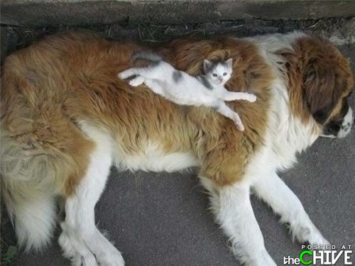 funny awesome animals 8 Animals that dont suck (45 Photos)