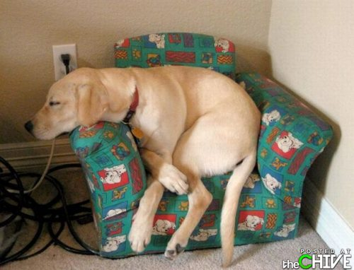 funny awesome animals 29 Animals that dont suck (45 Photos)