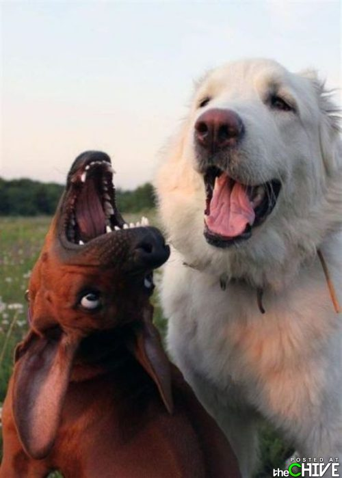 funny awesome animals 33 Animals that dont suck (45 Photos)