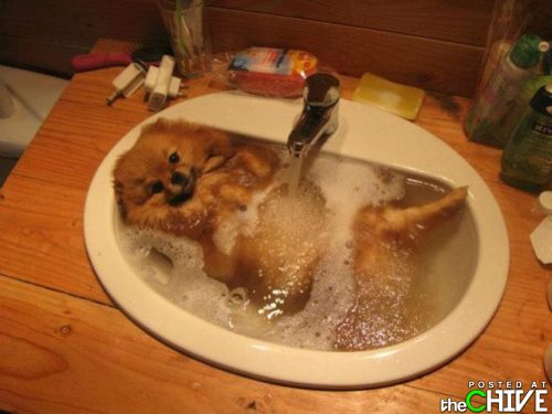 funny awesome animals 12 Animals that dont suck (45 Photos)