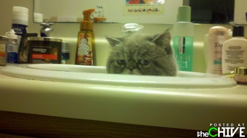 funny awesome animals 24 Animals that dont suck (45 Photos)