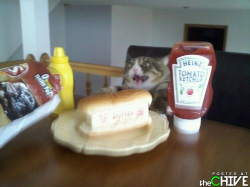 funny awesome animals 39 Animals that dont suck (45 Photos)