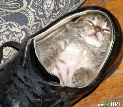 funny awesome animals 1 Animals that dont suck (45 Photos)