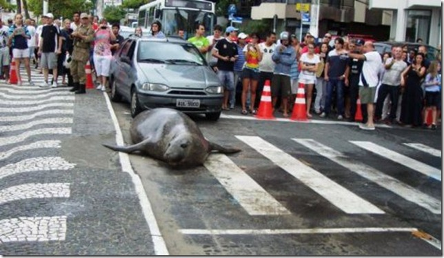 sea-lion-rescued-brazil-streets-0
