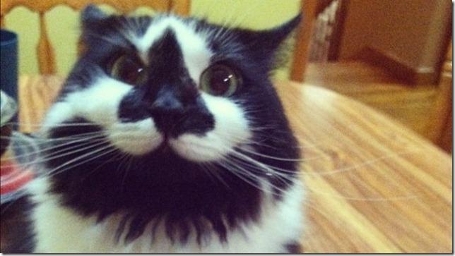 happy-cat1