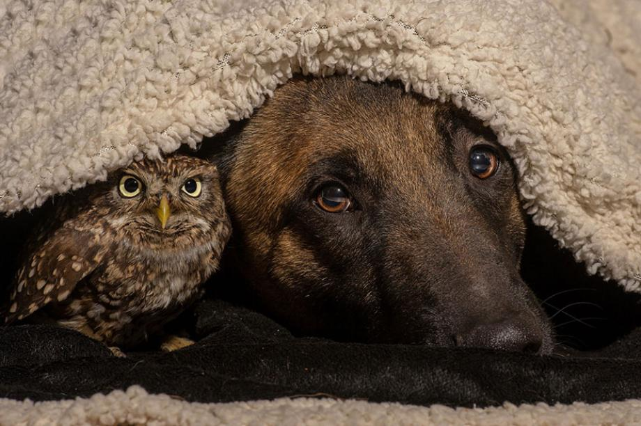 who-knew-dogs-and-owls-could-be-best-friends-14-hq-photos-121.jpg