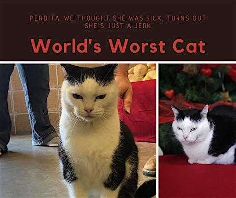 cea mai nesuferita pisica din lume.jpg